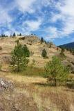 金黄山坡和树, Kalamalka湖省公园,弗农,加拿大 库存图片