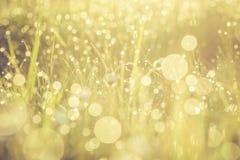 金黄抽象背景概念,软的焦点, bokeh,温暖的口气 库存图片
