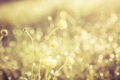 金黄抽象背景概念,软的焦点, bokeh,温暖的口气 库存照片