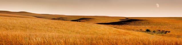 金黄日出堪萨斯Tallgrass大草原蜜饯美好的全景场面  免版税库存照片