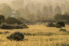 金黄有薄雾的草甸早晨 免版税库存照片