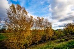 金黄树和云彩在河 库存图片