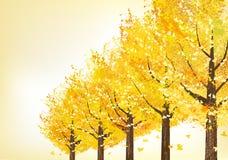 金黄树在晚秋天 免版税库存照片