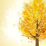 金黄树在秋天 免版税库存图片