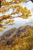 金黄橡木和叶子在百花山Mountainï ¼ Œ北京 库存照片