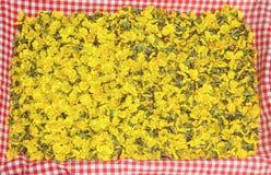 金黄款冬开花,在红色checke的自然手织的补救 库存图片