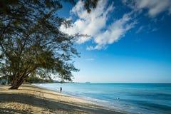 金黄海滩在热带 库存图片
