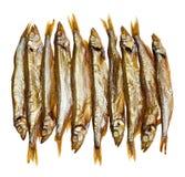 金黄熏制的西鲱 库存照片