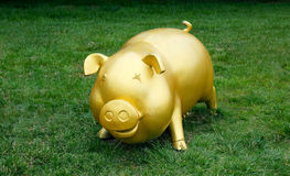 金黄猪 库存照片