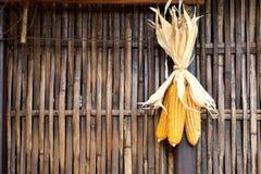 金黄玉米棒子垂悬烘干对竹墙壁 免版税库存照片