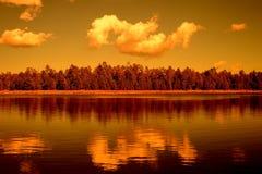 金黄轻的森林湖 免版税图库摄影