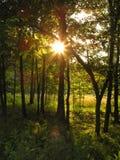 金黄的森林 免版税库存图片