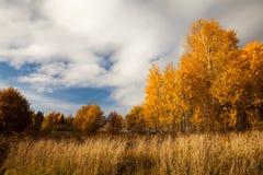金黄的秋天 免版税图库摄影