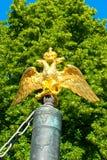 金黄的老鹰 图库摄影