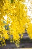 金黄的花 免版税图库摄影