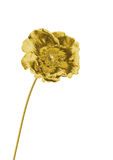 金黄的花 免版税库存图片