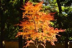 金黄秋叶在寺庙的庭院,京都日本里 库存照片