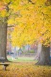 金黄秋天叶子在公园 免版税库存照片