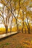 金黄秋天和下落的叶子日落 免版税库存照片