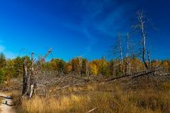 金黄秋天在乌克兰 停止的结构树 免版税库存图片