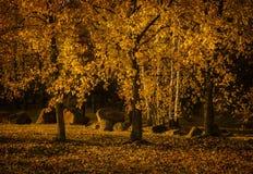 金黄秋天在公园 库存图片