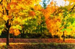 金黄秋天在公园 免版税库存图片