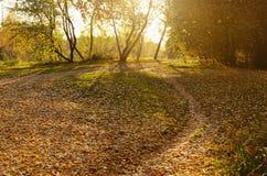 金黄秋天在公园 库存照片