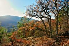 金黄秋天在山的一个树木繁茂区 图库摄影