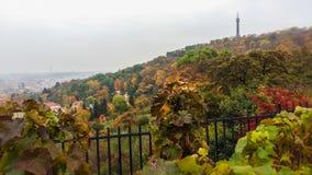金黄秋天在布拉格 免版税库存图片
