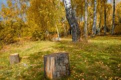 金黄秋天在10月 库存图片