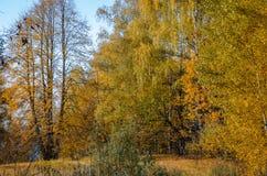 金黄秋天在10月 库存照片