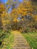 金黄秋天在Kurkino,莫斯科 库存图片