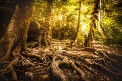 金黄秋天场面在森林,发光通过树的太阳里 库存图片