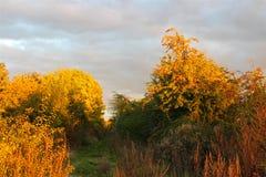 金黄秋天时间在10月 库存照片