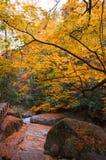 金黄秋天的森林 库存照片