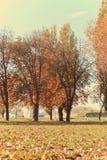 金黄秋天风景在公园;与金黄棕色叶子的树 免版税库存图片
