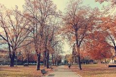 金黄秋天风景在公园;与金黄棕色叶子的树 免版税库存照片