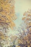 金黄秋天风景-与黄色的树在一个晴天离开 免版税库存照片