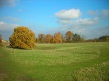 金黄秋天风景;黄色叶子、fileds和草甸 库存图片