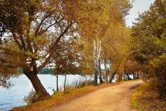 金黄黄色树秋天风景在湖的在公园 免版税库存照片