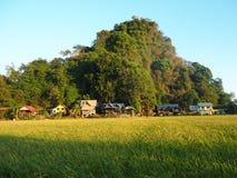金黄绿色稻田马来西亚 免版税库存照片