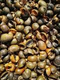 金黄苹果蜗牛 免版税图库摄影