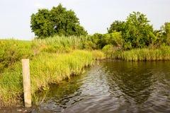 金黄草甸,路易斯安那 库存照片