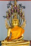 金黄菩萨雕象Wat Pho寺庙曼谷泰国 库存照片