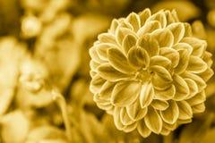 金黄装饰的花 免版税库存照片