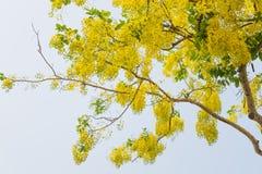 金黄阵雨或科学名字桂皮瘘 免版税图库摄影