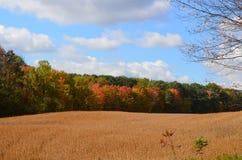 金黄领域在一美好的秋天天 库存照片