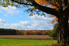 金黄领域在一美好的秋天天 免版税图库摄影