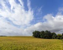 金黄领域在法国 图库摄影