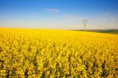 金黄领域风景 图库摄影